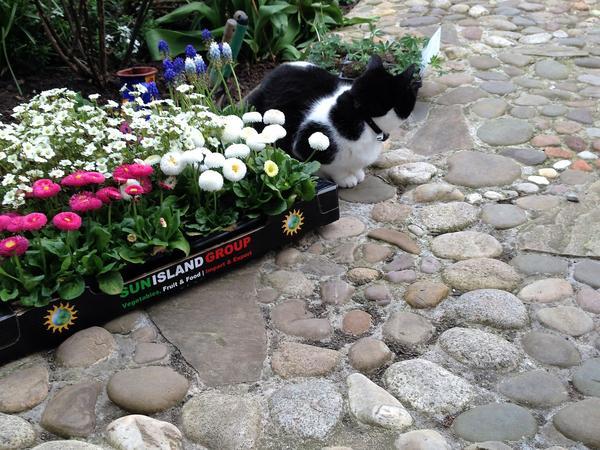 Catsitter wanted in cottage in Shankill, Dublin