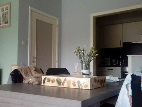 Housesitting assignment in Hasselt, Belgium
