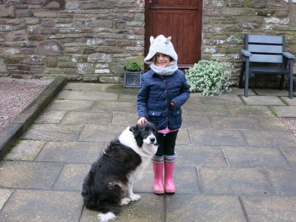 Pet sitter needed for my Border Collie in Suffolk