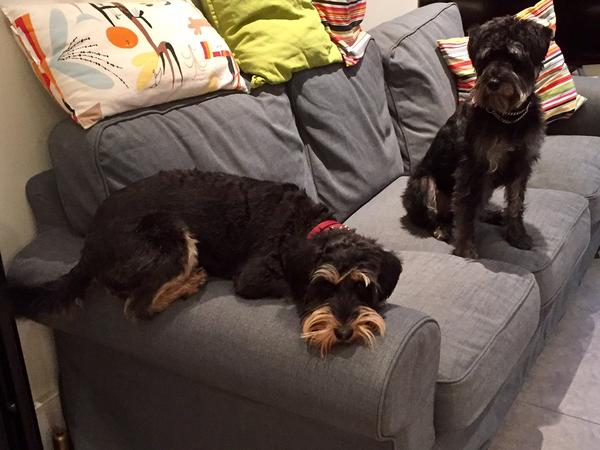 Lovely SW London home with two schnoodles