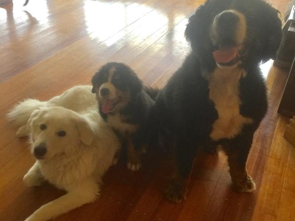 Housesitting assignment in Ashmore, QLD, Australia