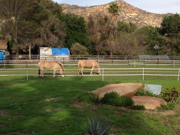 Housesitting assignment in Lakeside, CA, United States