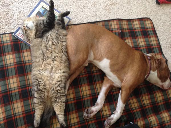 cozy house with furry friends looking for experienced sitters