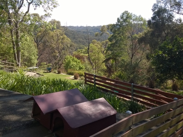 East Lindfield NSW AU, 2 cardigan corgis, 14 km from Sydney CBD