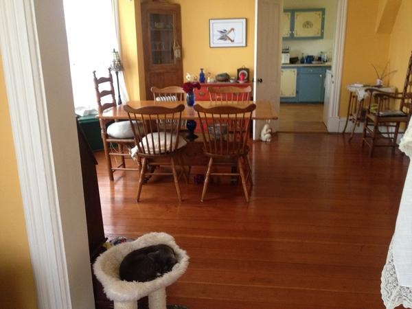 Housesitting assignment in Port Townsend, Washington, United States