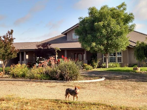 Housesitting assignment in Lodi, California, United States