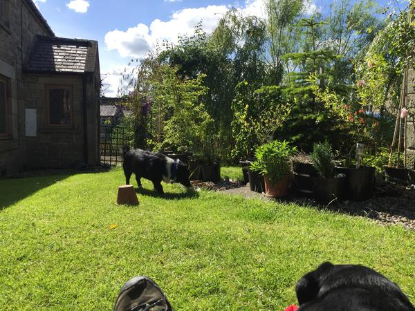 Housesitting assignment in Hexham, United Kingdom