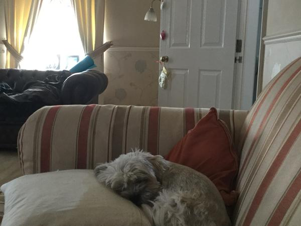 Housesitting assignment in Quorn, United Kingdom
