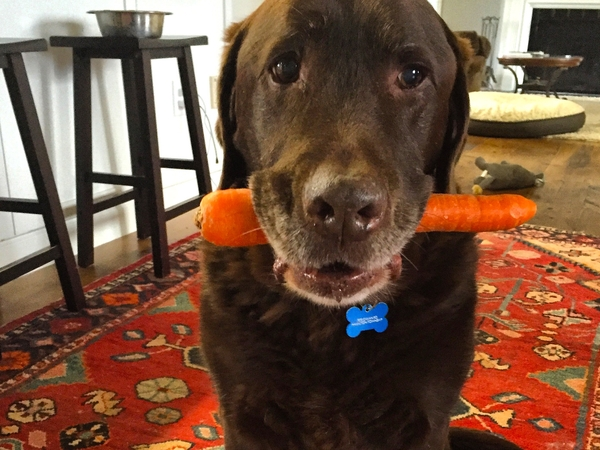 Looking for responsible pet sitter--Cobourg Ontario