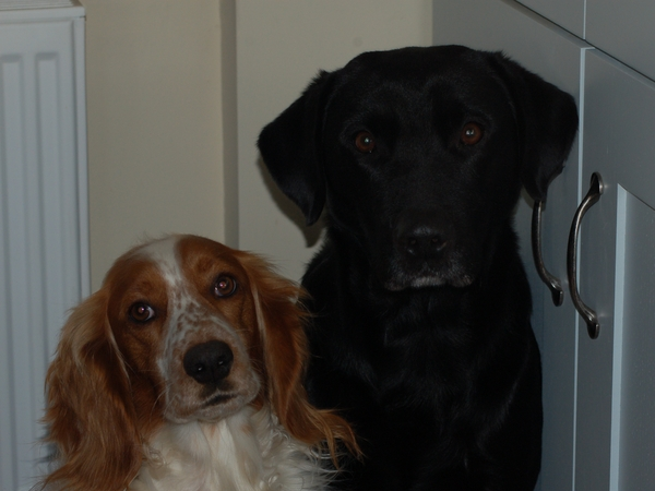 Sitters needed for farmhouse and 2 dogs in Vale of Belvoir nr Nottingham