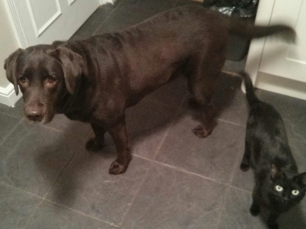 Sitter Needed for Dog and Cat in Horsham
