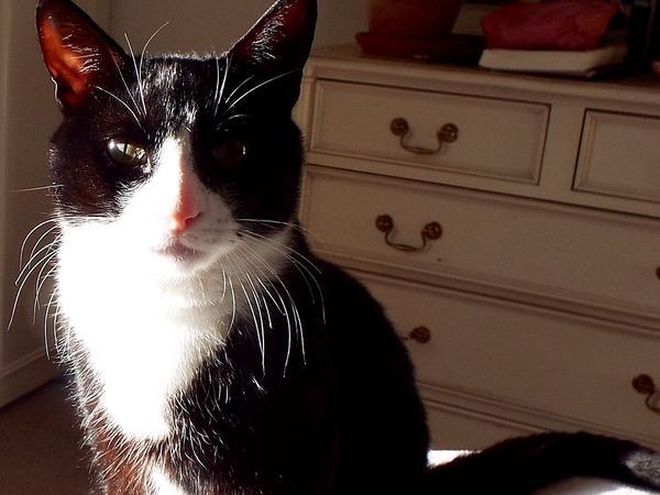 Cat sitter needed - Herne Hill SE24