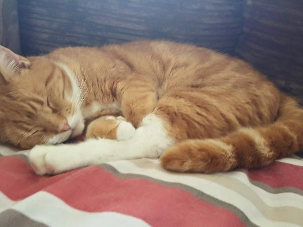 Cat sitter needed for a beautiful friendly cat
