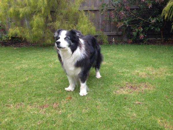 Housesitting assignment in Botanic Ridge, VIC, Australia