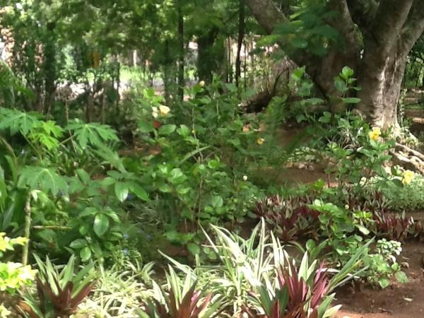 Housesitting assignment in Jozini, South Africa