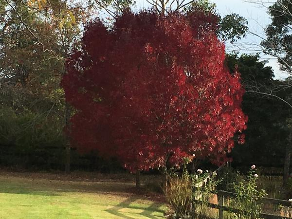 Housesitting assignment in Dural, New South Wales, Australia