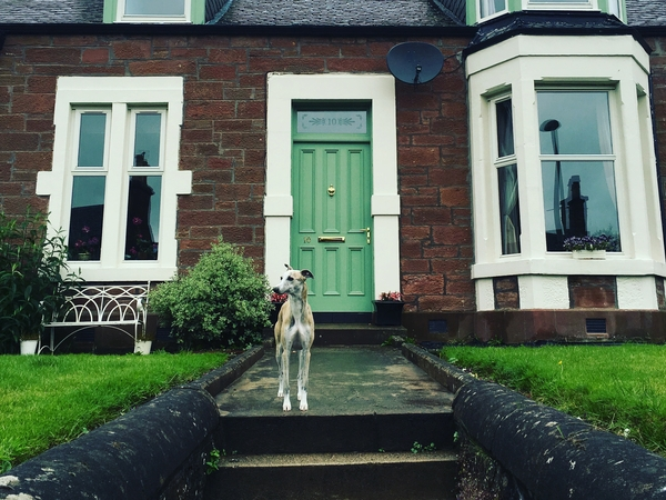 Housesitting assignment in Kirriemuir, United Kingdom
