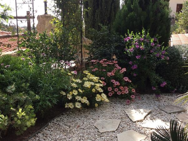 Housesitting assignment in Tála, Cyprus
