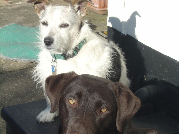 Two lovely dogs (Milo, a chocolate Labrador and Pippin a wire coated Jack Russell) need a pet/house sitter(s)for 10'days while  we are on holiday in Majorca.