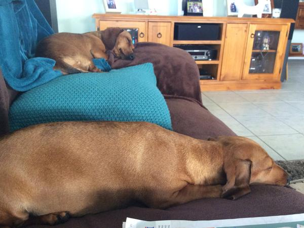 Housesitting assignment in Shell Cove, New South Wales, Australia