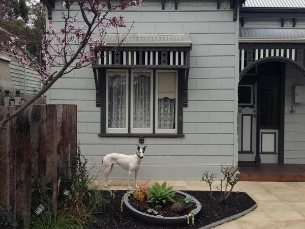 Housesitting assignment in Melbourne, VIC, Australia