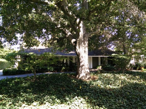 Housesitting assignment in Menlo Park, CA, United States