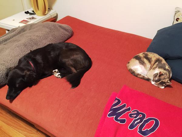 Apartment in Downtown PDX with Two Sweet Furbabies