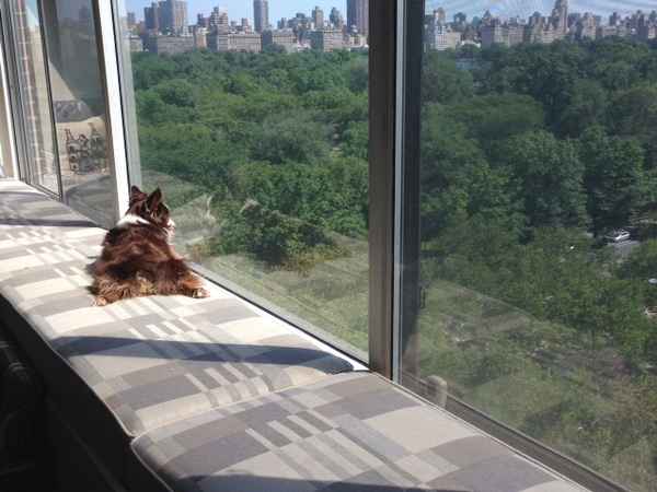 Welcome to Manhattan! For people who love a beautiful view of Central Park and Dogs