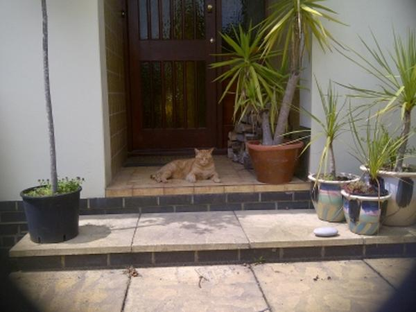 House / Pet Sitter needed near Worthing, Sussex