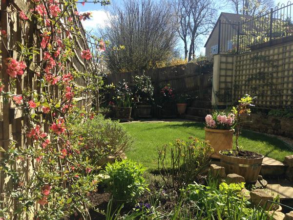 Housesitting assignment in Tisbury, United Kingdom