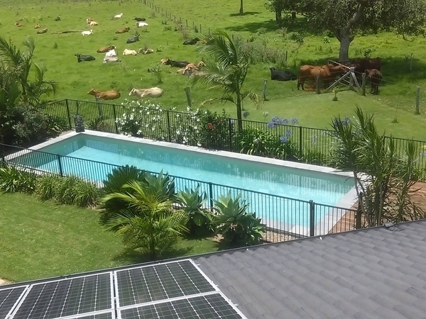 Housesitting assignment in Alstonville, New South Wales, Australia