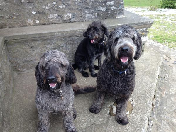 Housesitting assignment in Kendal, United Kingdom
