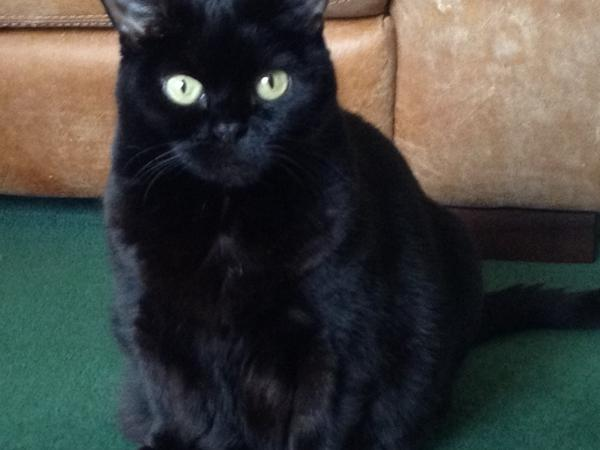Cat sitting in Edinburgh