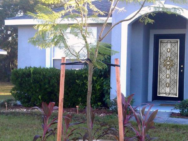 Housesitting assignment in Poinciana Place, Florida, United States