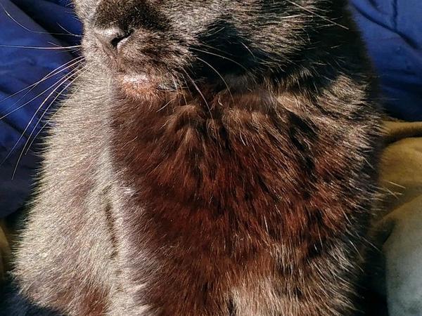 One Shy Bay Area Cat
