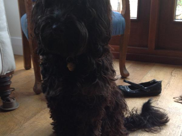 Pet sitter needed soon in Oxford for lovely cockapoo and 1 cat