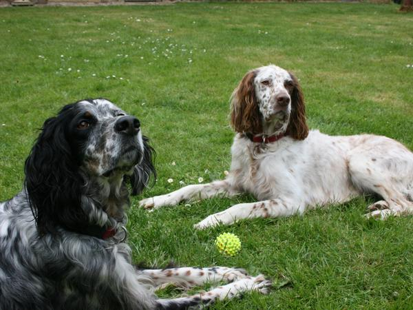 Pet and house sitter for 2 dogs in rural France