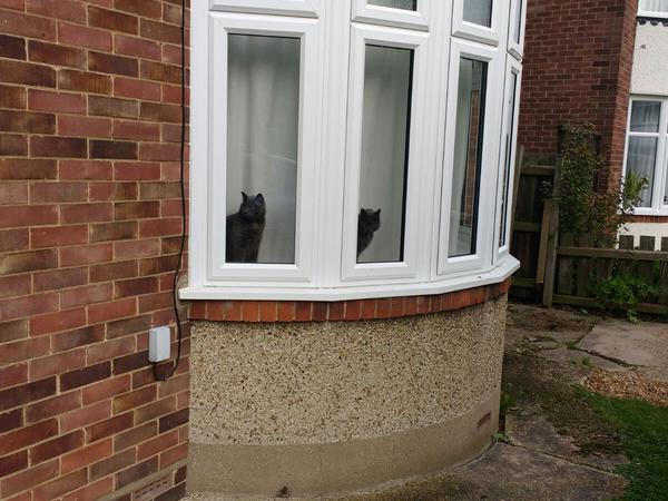 Housesitting assignment in Girton, United Kingdom