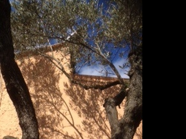 House/pet sitter for off-grid finca in Spain