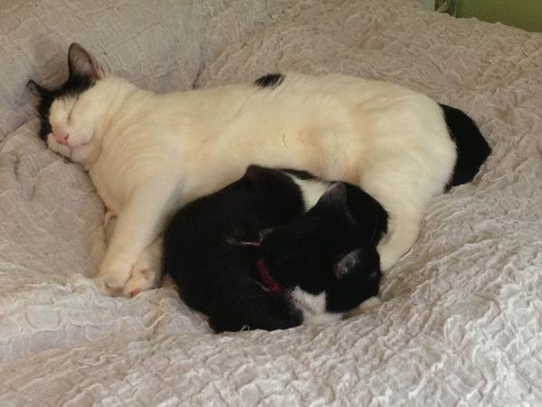 Catsitter / flatsitter  - Central/West London!