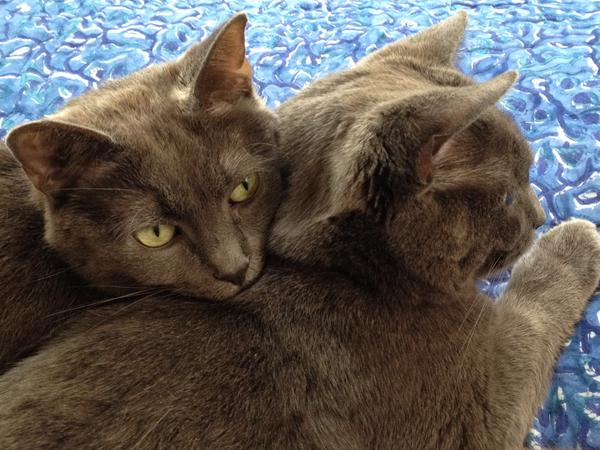 Cuddle pile Cats need Carer