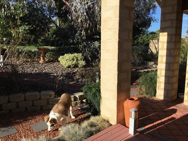 Housesitting assignment in Mandurah, Western Australia, Australia