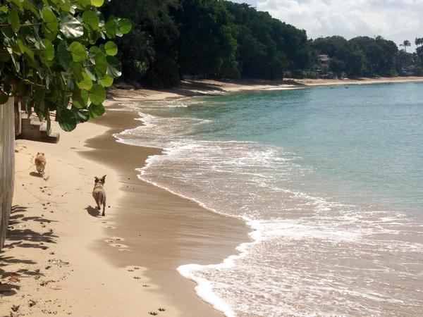 Loving Woofer Watchers in Beautiful Barbados!