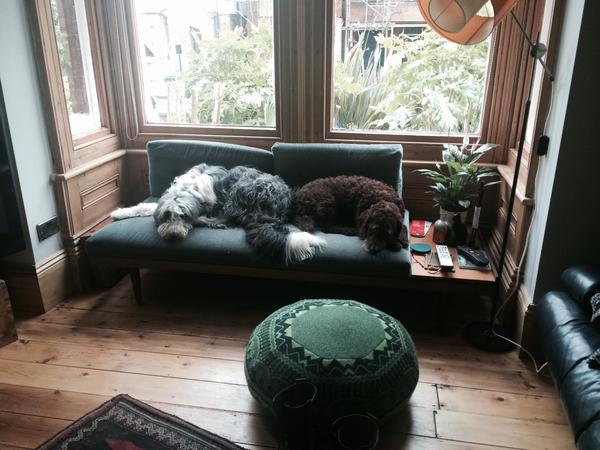 Pet sitter/house sitter needed for 2 lovely dogs Brighton