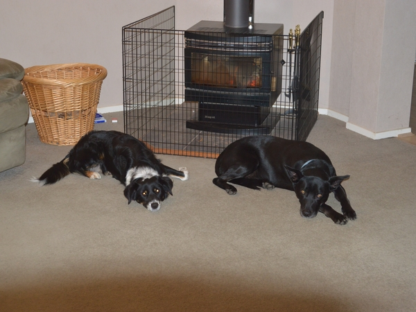House and Pet sitter required for nearly 4 weeks this winter.