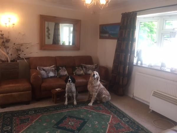 Looking for a sitter to look after my home and pets in a beautiful 3 acre location