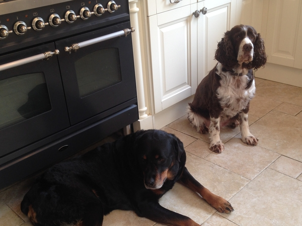Pet friendly Sitter required to stay in our Barnham, West Sussex home