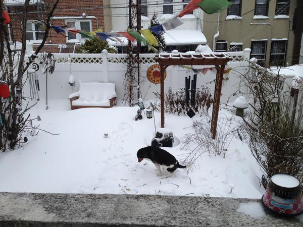 Housesitting assignment in Brooklyn, NY, United States