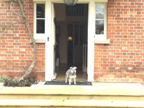 Lilli the Miniature Schnauzer would prefer to stay in her own home when we are away