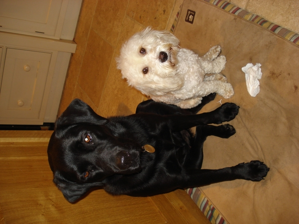 Pet sitter required for pets for half term holiday
